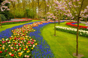 Netherlands garden